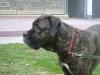 Professionelle Haustierbetreuung - Hunde Gassigehservice