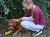 Gassigeh Dienste Wien - Tierbetreuung Wien