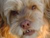 Hundehaltung Unterstützung - Gassigehservice Wien