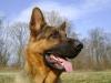 Dog Service Wien - Hunde Urlaubsservice Wien