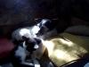 Hundebetreuungwien - Jack Russel Fox Terrier Mix/Kätzin
