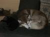 Hundebetreuungwien - Katze Naomi/Husky Rüde Maruk
