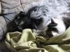 Hundebetreuungwien - Terrier Mix Winni/Katze Neo