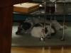 Hundebetreuungwien - Hauskater Neo und Jack Rassel Terrier Winni beim Rasten