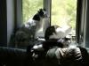 Hundebetreuungwien - Terrier Mix Winni, Kater Neo und Kätzin Leila beim Sonnen