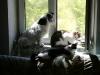Hundebetreuungwien - Hauskatze Leila, Kater Neo und Terrier Winni beim Genießen