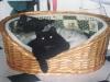 Katzenbaby Nela und Jack Russel Terrier Winni