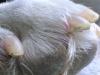 Hundebetreuung Wien / Hinterpfote - Die Hinterpfote besteht ebenso aus 5 Zehen mit Krallen und verfügt über den selben Ballenaufbau.  Es gibt hier jedoch einen kleinen Unterschied in der Bezeichnung. Die Ballen der Vorderläufe nennen sich Karpalballen und Die der Hinterläufe Tarsalballen.