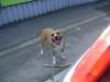 Hundeausführer - Dogwalker - Hundebetreuung Wien