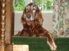 Dog Sitter Service - Hundesitter Service