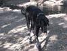 Dogge Monty auf Wanderung