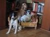 Terrier-Max/Terrier-Winni/Spaniel-Bella
