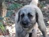 Terrier Mix Männchen philosophiert
