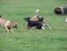 Hundetreiben in der Hundezone