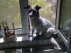 Terrier Mix Winni beim Sonnenbaden