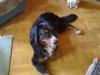 Berner Sennenhund Gaston lächelt