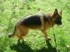 German Dog - German Dog Photography Stieglecker Vienna Austria