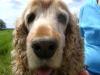 Hundebetreuung Wien - Betreute Hunde