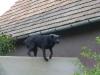 Hundegestik - Hundemimik