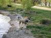 Hundevergnügen