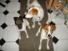Hundebetreuung Stieglecker - Hundetraining Bildergalerie - Hunde Aufmerksamkeits Training