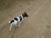 Hundebetreuung Stieglecker - Hundetraining Bildergalerie - Outdoor Einzeltraining