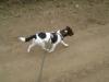 Hundebetreuung Stieglecker - Hundetraining Bildergalerie - Foxl Training
