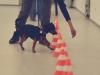 Hundebetreuung Stieglecker - Hundetraining Bildergalerie - Hindernistraining
