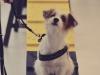 Hundebetreuung Stieglecker - Hundetraining Bildergalerie - Indoor Einzeltraining