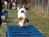Hundebetreuung Stieglecker - Hundetraining Bildergalerie - Geschicklichkeitstraining
