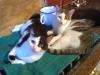 Hauskatzen - Haustier Betreuung Wien