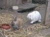 Kleintierbetreuung - Kaninchen Mädchen Marie und Bub Felix