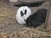 Kleintierbetreuung - Kaninchen Bub Peppino und Mädchen Emilie