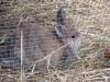 Kleintierbetreuung - Kaninchen Mädchen Marie