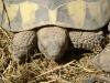Landschildkröten - Man unterscheidet derzeit 313 Arten mit über 200 Unterarten