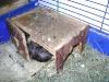 Kleintierbetreuung / Meerschweinchen-Behausung