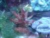 Tierbilder Galerie Stieglecker - Korallen - Sie leben auf den Skeletten ihrer Vorfahren und stehen unter Naturschutz.