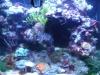 Tierbilder Galerie Stieglecker - Korallen - Diese Polypen sind an ihrer Basis zusammengewachsen.