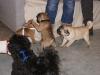 Hundebetreuung Wien - Welpen / Die Erziehung des Welpen sollte bereits von Anfang an beginnen.