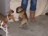 Hundebetreuung Wien - Welpen / Ein Welpe ist erfreulicherweise noch voller Energie, wissbegierig, voller Lernfreudigkeit und relativ leicht zu erziehen.