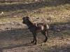 Hundebetreuung Wien - Hundewelpen / Eine artgerechte Hundeerziehung ist die Basis für eine harmonische Mensch-Tier-Beziehung und bedeutet zudem auch Sicherheit für Mensch und Hund.