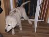 Hundebetreuung Wien -  Hundewelpen / Nach drei Wochen können sie hören und verlassen zum ersten Mal die Höhle, um am Eingang zu spielen.