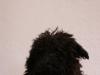 Hundebetreuung Wien -  Hundewelpen / Damit sie von Anfang an vor gefährlichen Krankheiten geschützt sind, empfiehlt die Ständige Impfkommission der Veterinärmediziner (StIKo Vet.) eine Grundimmunisierung in den ersten beiden Lebensjahren beim Tierarzt durchführen zu lassen.