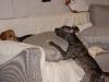 Hundebetreuung Wien - Junge Hunde / Ein verantwortungsbewusster Hundehalter sollte darüber informiert sein, welche Krankheiten und Gefahren seinem vierbeinigen Freund drohen, und vor allem, was vorbeugend unternommen werden kann, um das Vermeidbare zu verhindern.