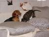 Hundebetreuung Wien - Junge Hunde / Schutzimpfungen sind unverzichtbarer Bestandteil der Krankheitsvorbeugung.