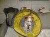 Welpentraining Fotos - Hundebetreuung Stieglecker - Welpenunterricht