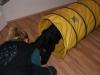 Welpentraining Fotos - Hundebetreuung Stieglecker - Hunde Welpenschule
