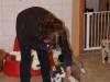 Welpentraining Fotos - Hundebetreuung Stieglecker -