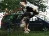 Welpentraining Fotos - Hundebetreuung Stieglecker - Welpenkurse